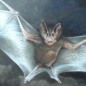 Fledermaus Krafttier Bedeutung Malerei Kunst