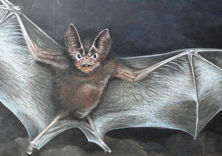 Fledermaus Krafttier Malerei der Künstlerin Sabine Koschier, Detail