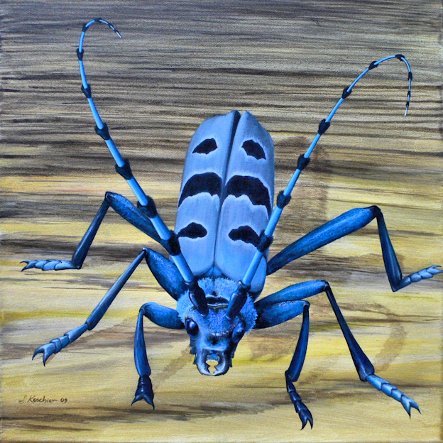 Käfer Alpenbock Krafttier Malerei der Künstlerin Sabine Koschier