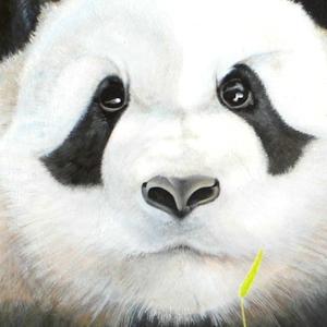 Panda oder Pandabär Krafttier Bedeutung gemalt Kunst