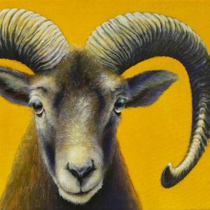 Schaf oder Widder als Krafttier Bedeutung Malerei Kunst