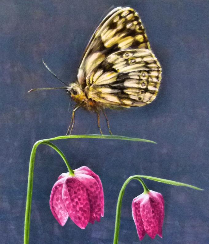 Schmetterling Schachbrettfalter Krafttier Malerei
