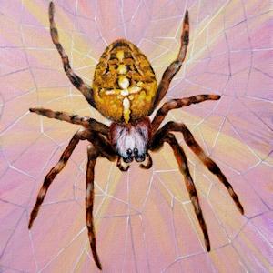 Krafttier Spinne / Kreuzspinne Malerei der Künstlerin Sabine Koschier