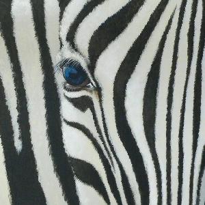 Zebra Krafttier Bedeutung