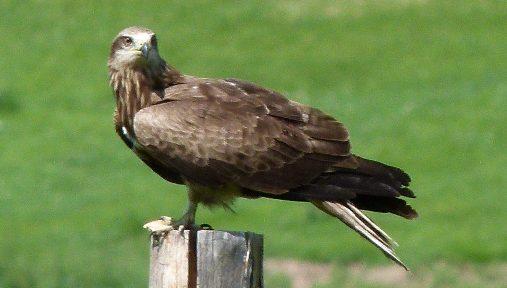 Bei Schamanen: Adler und Geier