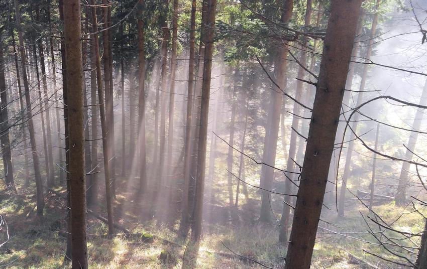 Schattenspiel bei Nebel und Sonne